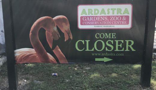 【バハマ】フラミンゴの聖地『Ardastra Gardens Zoo 』体験レポート【フラミンゴ大好き】
