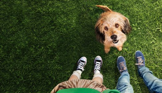 Netflix 映画【ベンジー】(2018)雑種犬の天才犬!感想まとめ【ネタバレなし】