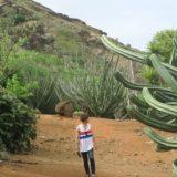 【ココクレーター植物園】ハワイの穴場!巨大サボテンでインスタ映えを狙おう!
