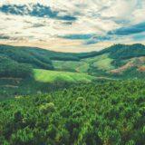 スタバのコーヒー豆の『品種』について!アラビカ種とロブスタ種を解説!